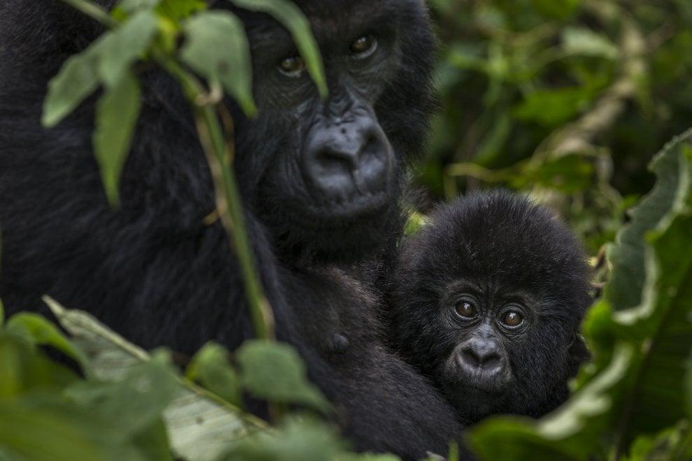 Wwf, effetto clima: gli animali e i paradisi a rischio
