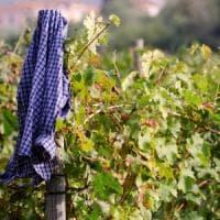 Vino naturale e vignaioli artigiani: la Città dell'Altra Economia punta