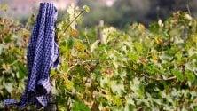 Sostenibilità, la Città dell'Altra Economia punta sul vino naturale