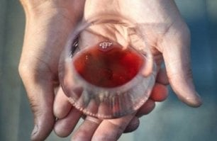 Pelaverga, Quagliano e Chatus: quei vini rari e (quasi) sconosciuti di Saluzzo