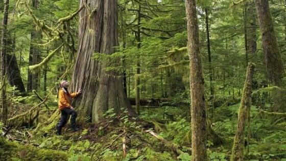 Via libera dal Consiglio dei ministri al Testo unico sulle foreste: i favorevoli e i contrari