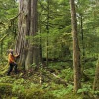 Via libera dal Consiglio dei ministri al Testo unico sulle foreste: i favorevoli e i...