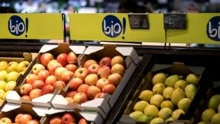 La ricerca scommette sul bio per produzioni eco friendly accessibili