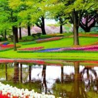 Fioriture di stagione: dall'Olanda alle Azzorre, le più spettacolari d'Europa