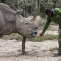 Kenya: morto ultimo rinoceronte bianco settentrionale maschio