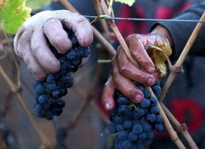 La festa che non ti aspetti nella Calabria più nascosta: arriva il Saracena Wine Festival