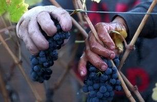 La festa che non ti aspetti nella Calabria più nascosta:  il Saracena Wine Festival