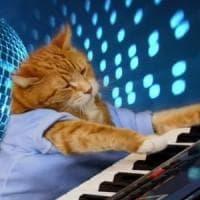 Addio a Bento: così la Rete ricorda il gatto che suonava la tastiera