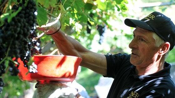 """Francesco Moser: """"51,151. Era il mio record dell'ora. Adesso è il mio vino"""""""