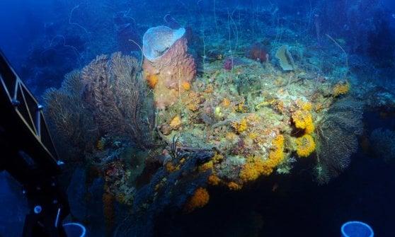 """Scoperta una """"zona crepuscolare"""" dell'oceano piena di pesci sconosciuti"""