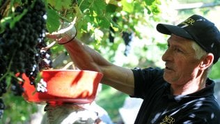 """Francesco Moser e 51,151:""""Era il mio record dell'ora, adesso è il nome del mio vino"""""""