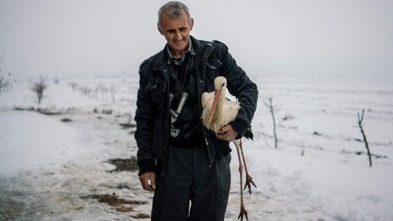 """Bulgaria, l'uomo delle cicogne che combatte contro il gelo: """"Abbiamo aperto le nostre case per salvarle"""""""