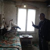 In Bulgaria le cicogne salvate dal gelo: la mobilitazione su Fb