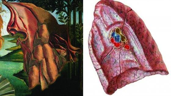 """""""C'è un simbolo della vita nascosto sotto il mantello della Venere di Botticelli"""""""