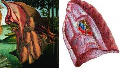 """""""C'è un simbolo della vita nascosto  sotto il manto della Venere di Botticelli"""""""