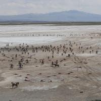 La Bolivia rievoca battaglia di Canchas Blancas: il set del deserto a 4mila metri è da brivido