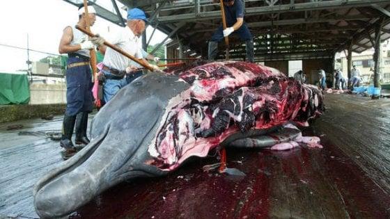 """Salviamo le Balene: """"Non uccidetele e non mangiatele, la loro carne è piena di mercurio"""""""