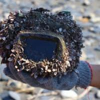 Taiwan, l'odissea della macchina fotografica persa in mare: trovata ancora carica dopo 3 anni