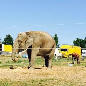 Spagna, incidente sull'autostrada con il camion da circo: muore un elefante