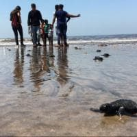 Mumbai, via i rifiuti dalla spiaggia: dopo 20 anni tornano le tartarughe