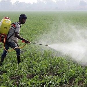 """La Fao lancia l'agroecologia: """"Il vecchio modello è esaurito"""""""