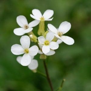 Scoperto segreto dei fiori, è possibile farli sbocciare a tempo