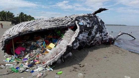 L'inquinamento uccide un capodoglio: nel suo stomaco 29 chilogrammi di plastica