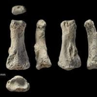 I primi passi fuori dall'Africa per Homo sapiens