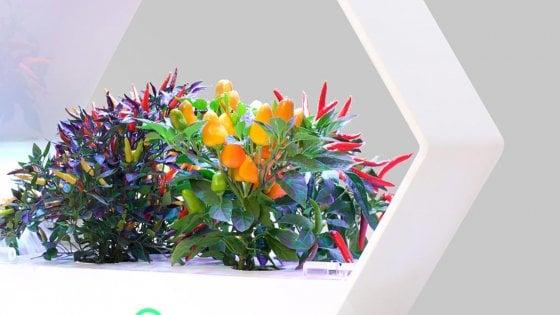 La mini serra idroponica da casa ci darà cibo più eco e tecnologico