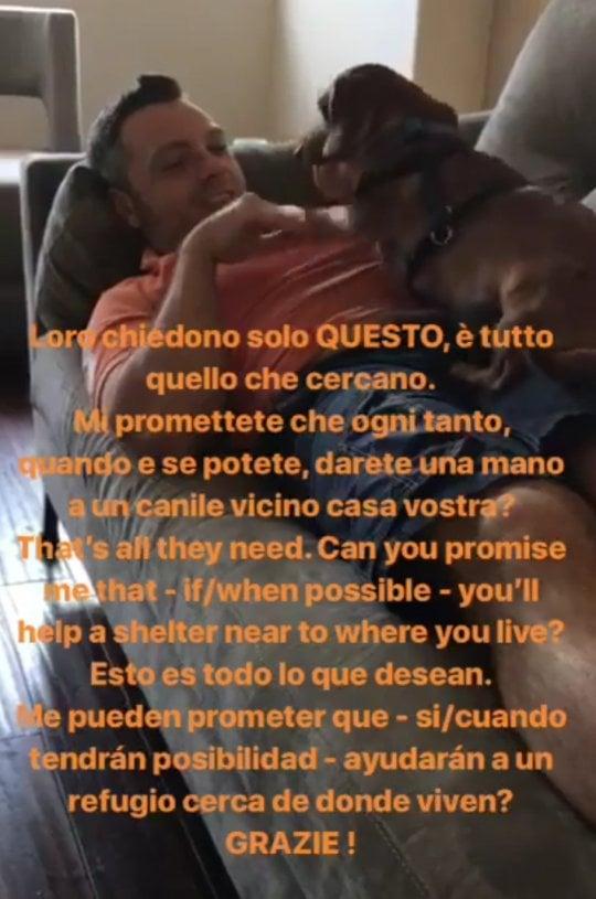 """""""I cani non chiedono altro che coccole"""", l'appello di Tiziano Ferro: """"Aiutate i canili, adottateli"""""""
