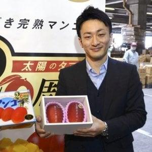 Giappone, asta da record: coppia di manghi venduta a più di 3000 euro