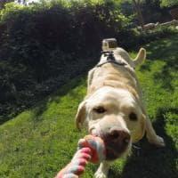 L'intelligenza artificiale che impara guardando con gli occhi dei cani
