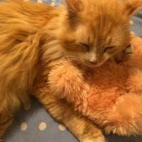 Il gatto Toby fa 19 km per tornare a casa dalla famiglia che non lo voleva. E i ...