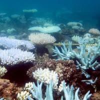 La Grande Barriera corallina è cambiata per sempre, colpa dei cambiamenti climatici