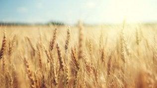 Ceta: sale l'export agroalimentare italiano, crolla l'import di grano