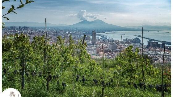 Le vigne di Partenope: la vocazione speciale di Napoli per i vigneti urbani