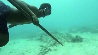 """Le lunghe apnee dei """"nomadi del mare"""": il segreto è nel Dna"""