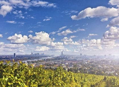 Vigne sì, ma in città: da Vienna a Parigi, da Torino a Roma, ecco i filari tra le case
