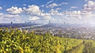 Vigne in città: da Vienna a Parigi a Roma, i filari tra le case