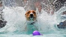 Allarme cani obesi: a Torino uno su tre è sovrappeso. E per curarli spunta anche l'acquagym