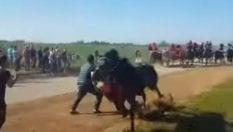 Foggia, 78enne muore travolto da un cavallo durante la tradizionale 'Cavalcata dei buoi'