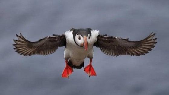 Uccelli, una specie su otto a rischio estinzione: il 40% già in declino