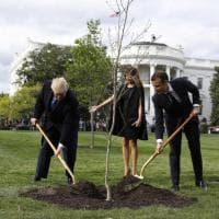 Trump e Macron piantano una quercia 'per la pace': è il regalo di Stato Usa al presidente francese Macron