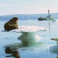 L'Artico si scalda più velocemente del resto del Pianeta