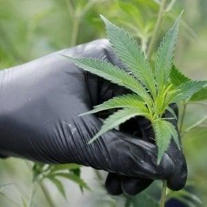 Uruguay, caos per la marijuana legale: poca produzione e troppa richiesta, lunghe code e aziende in tilt