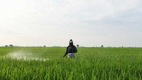 L'Ue vieta tre pesticidi neonicotinoidi pericolosi per le api