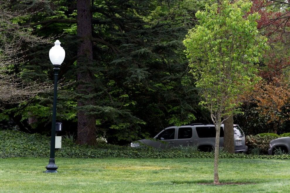 Mistero alla Casa Bianca, scompare l'albero piantato da Trump e Macron