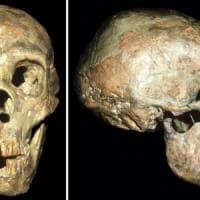 Nel cervelletto il segreto della scomparsa dei Neanderthal