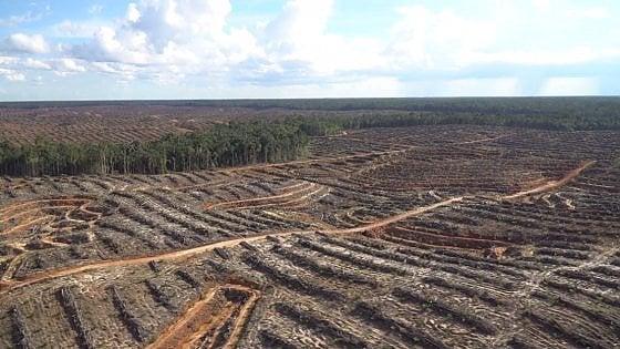 """""""In Indonesia deforestazione senza fine per l'olio di palma"""", l'atto di accusa di Greenpeace"""