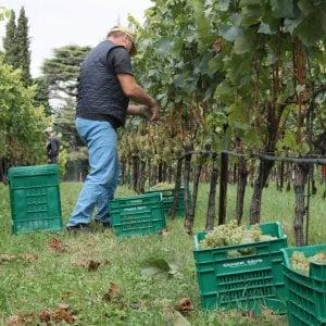Badanti, baby sitter, rider: in Italia 600mila lavoratori occasionali